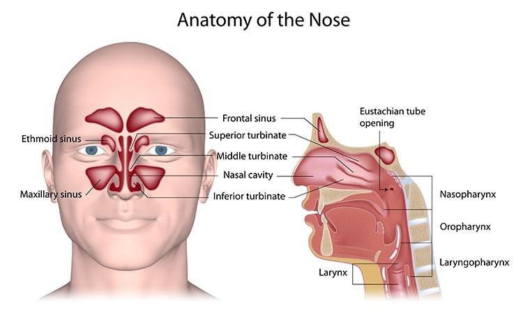 Sinusitis Pressure Relief In Bellingham , WA - Bellingham  Acupuncture Clinic